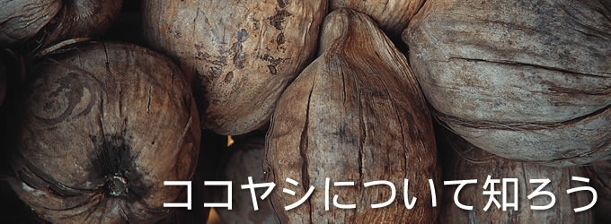 title_coconutpalm