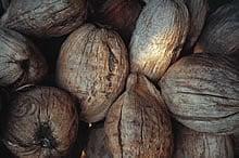 coconuts_yoko